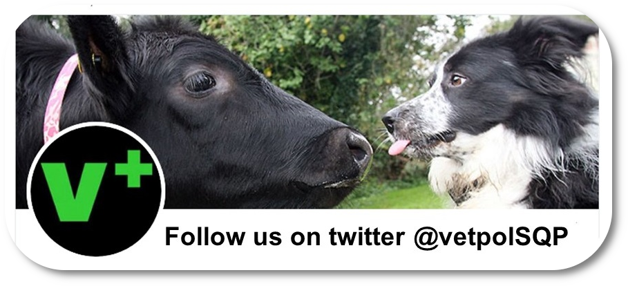 Cow and collie dog as shown on Vetpol Twitter page