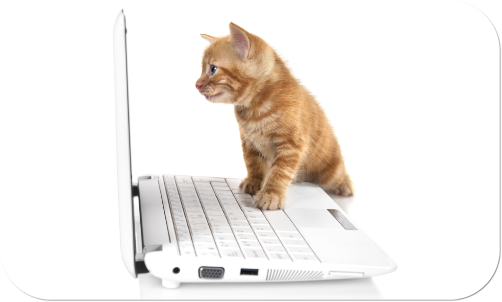 Cat on Laptop choosing Vetpol course