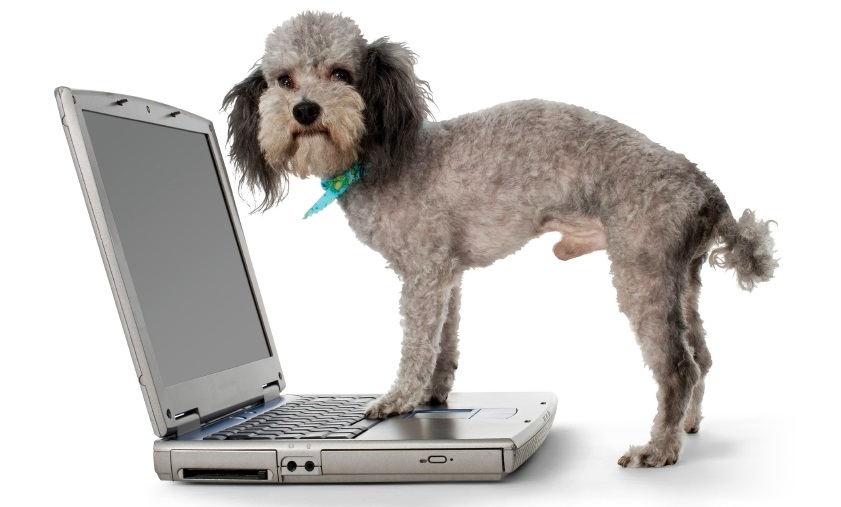 Dog on laptop keeping contact preferences up to date
