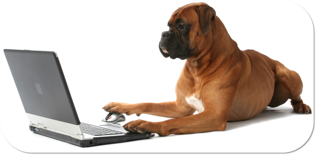 Picture of a dog on a laptop looking at SQP courses
