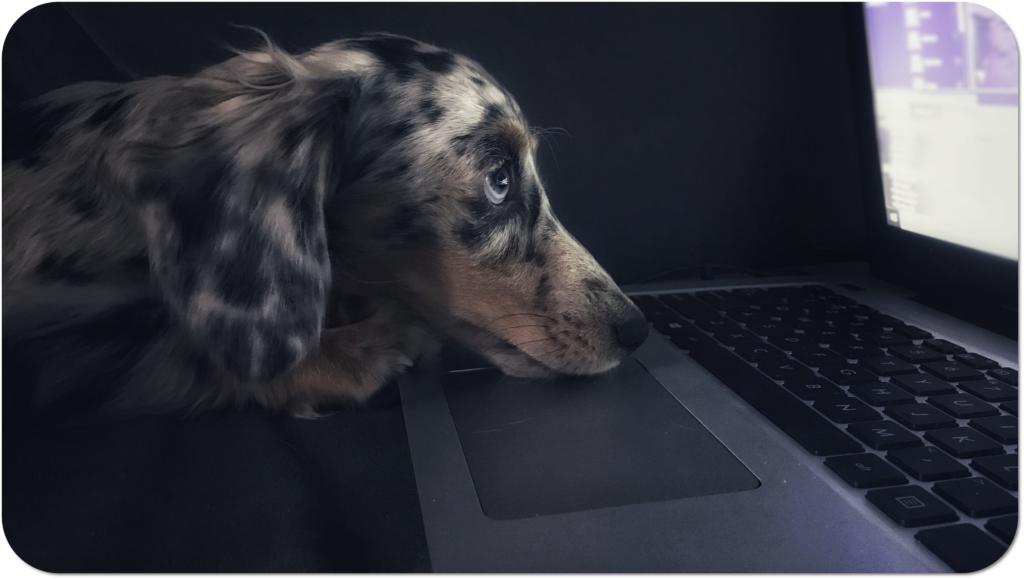 Picture of a dog on a laptop doing an online Vetpol SQP exam