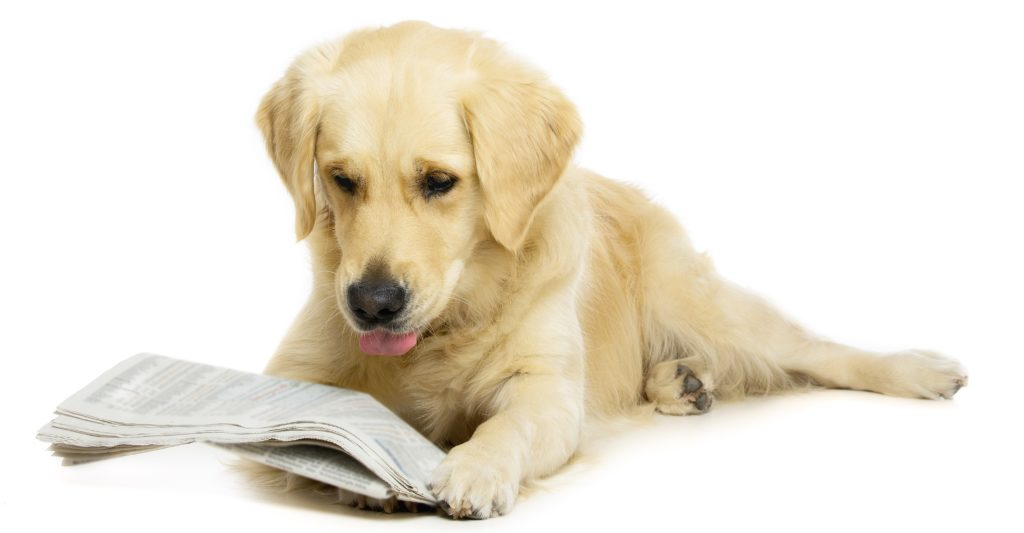 Dog reading a paper with the Vetpol register