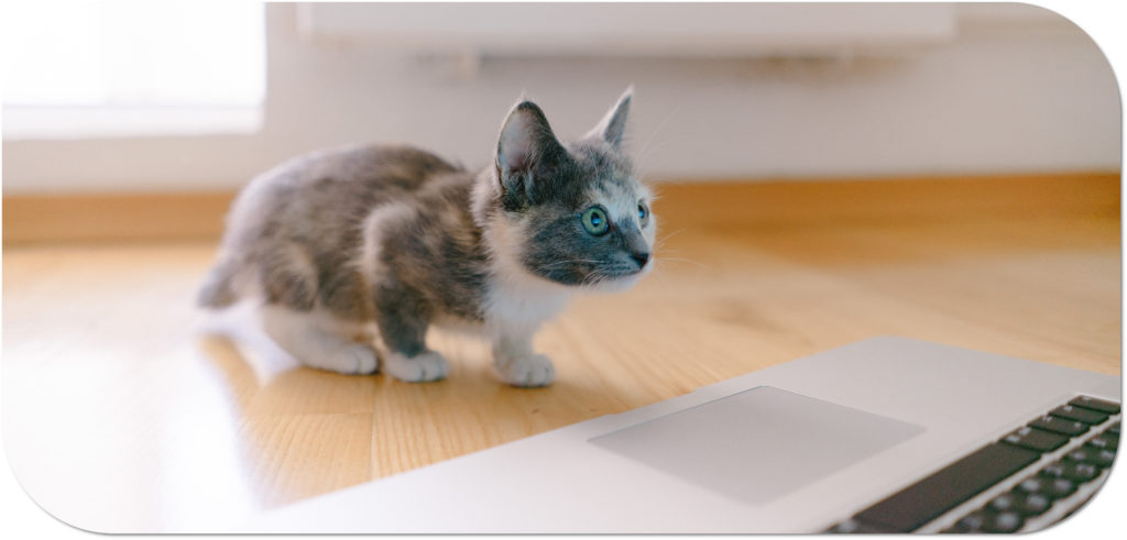 Kitten on a laptop contact us at Vetpol