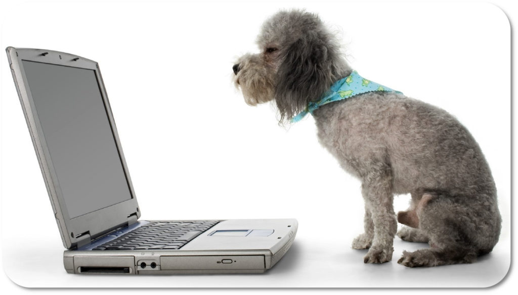 Photo of a dog online looking at support forum